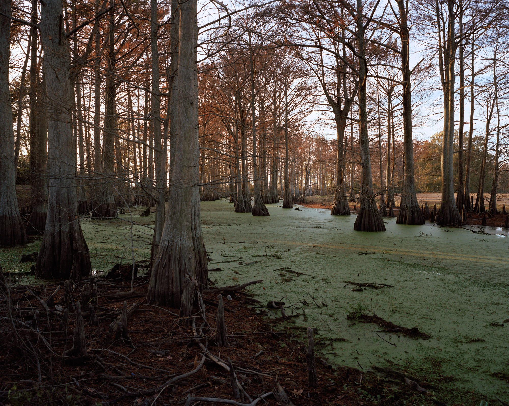 Swamp, Midnight, Mississippi